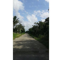 Foto de terreno habitacional en venta en  , chicxulub, chicxulub pueblo, yucatán, 2811749 No. 01