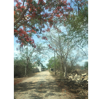 Foto de terreno habitacional en venta en  , cholul, mérida, yucatán, 2519314 No. 01