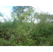 Foto de terreno habitacional en venta en  , cholul, mérida, yucatán, 2606372 No. 01