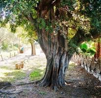 Foto de casa en venta en colonia cuautlixco , santa inés, cuautla, morelos, 2992302 No. 02