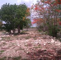 Foto de terreno habitacional en venta en  , conkal, conkal, yucatán, 3518963 No. 01