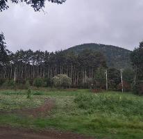 Foto de terreno habitacional en venta en cuautepexco y xaxaltitla , san francisco zentlalpan, amecameca, méxico, 3181418 No. 01