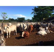 Foto de rancho en venta en  , dzilam de bravo, dzilam de bravo, yucatán, 2300066 No. 01