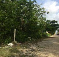Foto de terreno habitacional en venta en, dzitya, mérida, yucatán, 2042489 no 01