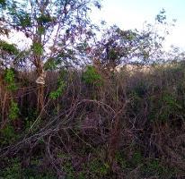 Foto de terreno habitacional en venta en  , dzitya, mérida, yucatán, 0 No. 03