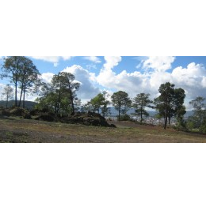Foto de terreno habitacional en venta en  , el mirador, uruapan, michoacán de ocampo, 1191771 No. 01