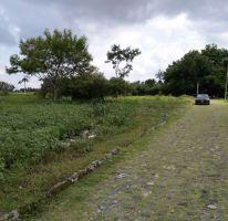 Foto de terreno habitacional en venta en, el venadito, ayala, morelos, 2028039 no 01