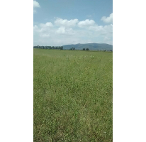 Foto de terreno comercial en venta en  , fuentezuelas, tequisquiapan, querétaro, 2323849 No. 01