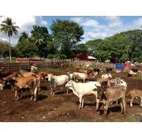 Foto de rancho en venta en  , hecelchakan, hecelchakán, campeche, 2955530 No. 01