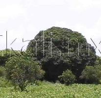 Foto de terreno habitacional en venta en s/n , isla de juana moza, tuxpan, veracruz de ignacio de la llave, 578071 No. 01
