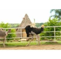 Foto de rancho en venta en  , jalcomulco, jalcomulco, veracruz de ignacio de la llave, 2564224 No. 01