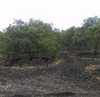 Foto de terreno habitacional en venta en, los palmitos, cadereyta jiménez, nuevo león, 1748044 no 01