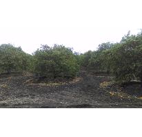 Foto de terreno habitacional en venta en  , los palmitos, cadereyta jiménez, nuevo león, 2613264 No. 01