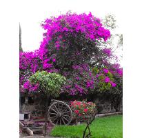 Foto de terreno habitacional en venta en mirlos , lomas de san esteban, texcoco, méxico, 1974427 No. 01