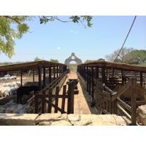 Foto de rancho en venta en  , motul de carrillo puerto centro, motul, yucatán, 2343173 No. 01