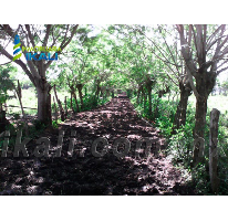 Foto de terreno habitacional en venta en ojite, ojite, tuxpan, veracruz, 786431 no 01