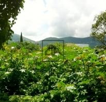 Foto de terreno habitacional en venta en, pedregal de las fuentes, jiutepec, morelos, 484327 no 01