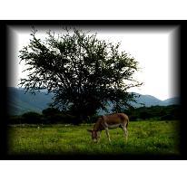 Foto de terreno habitacional en venta en  , pilcaya, chiautla, puebla, 2699841 No. 01