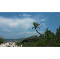 Foto de terreno habitacional en venta en  , puerto morelos, benito juárez, quintana roo, 2288528 No. 01