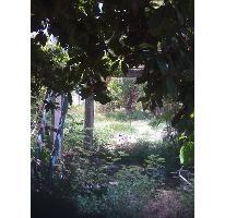 Foto de terreno habitacional en venta en  , puerto morelos, benito juárez, quintana roo, 2737943 No. 01