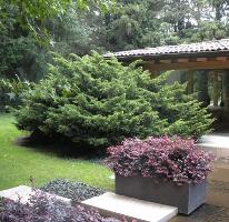 Foto de casa en venta en  , rancho san francisco pueblo san bartolo ameyalco, álvaro obregón, distrito federal, 2833202 No. 01