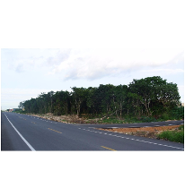 Foto de terreno comercial en venta en  , región 515, benito juárez, quintana roo, 2343231 No. 01