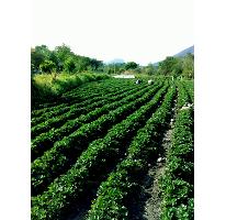 Foto de terreno comercial en venta en  , santa ana xochuca, ixtapan de la sal, méxico, 2280146 No. 01