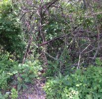 Foto de terreno habitacional en venta en sendero de la pradera 11, san gaspar, jiutepec, morelos, 2145534 no 01