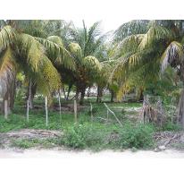 Foto de terreno habitacional en venta en  , telchac puerto, telchac puerto, yucatán, 1039759 No. 01