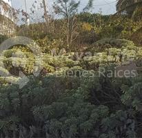 Foto de casa en venta en  , telchac puerto, telchac puerto, yucatán, 4658177 No. 01