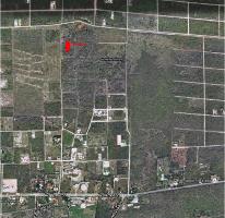 Foto de terreno habitacional en venta en  , temozon, temozón, yucatán, 1286801 No. 01