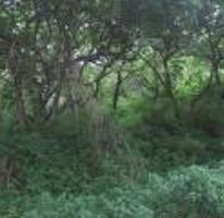 Foto de terreno habitacional con id 316868 en venta en las golondrinas gaviotas 42 las golondrinas no 01