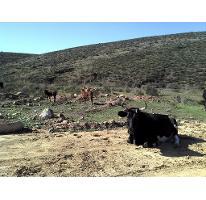 Foto de terreno habitacional en venta en  , valle de las palmas, tecate, baja california, 2739548 No. 01