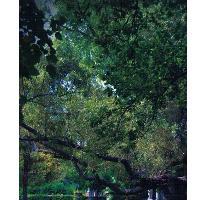 Foto de terreno habitacional en venta en  , y, parras, coahuila de zaragoza, 2610003 No. 01