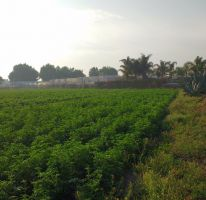 Foto de terreno habitacional en venta en zaragoza 120, san sebastián el grande, tlajomulco de zúñiga, jalisco, 1741812 no 01