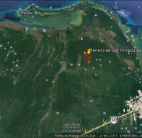 Foto de terreno habitacional en venta en zona agropecuaria tablaje 37, francisco may, felipe carrillo puerto, quintana roo, 2202200 no 01