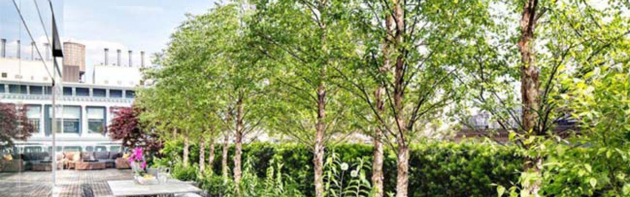 Casavantes, id 1601447, roof garden, 245